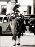 County Parade Queen