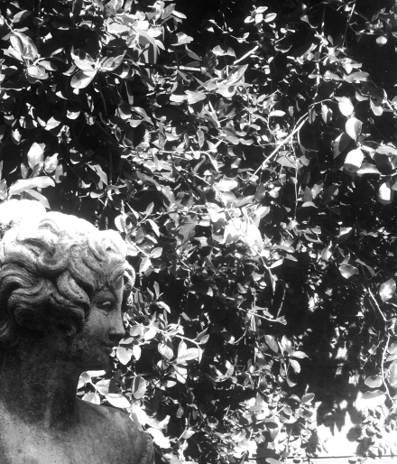 Garden Secret, Jennifer Allison