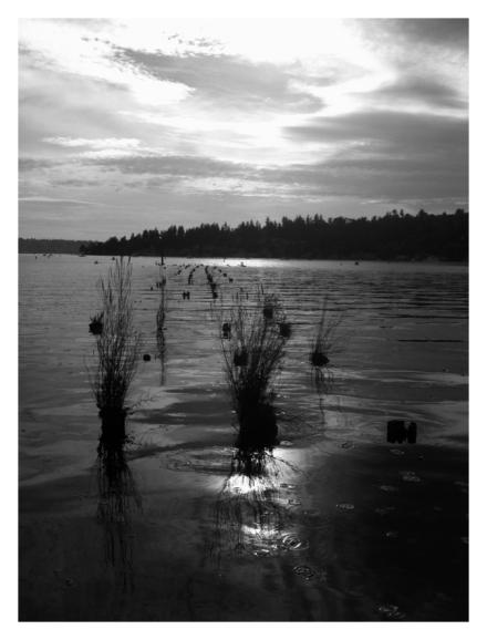 Lake Washington, Jennifer Allison