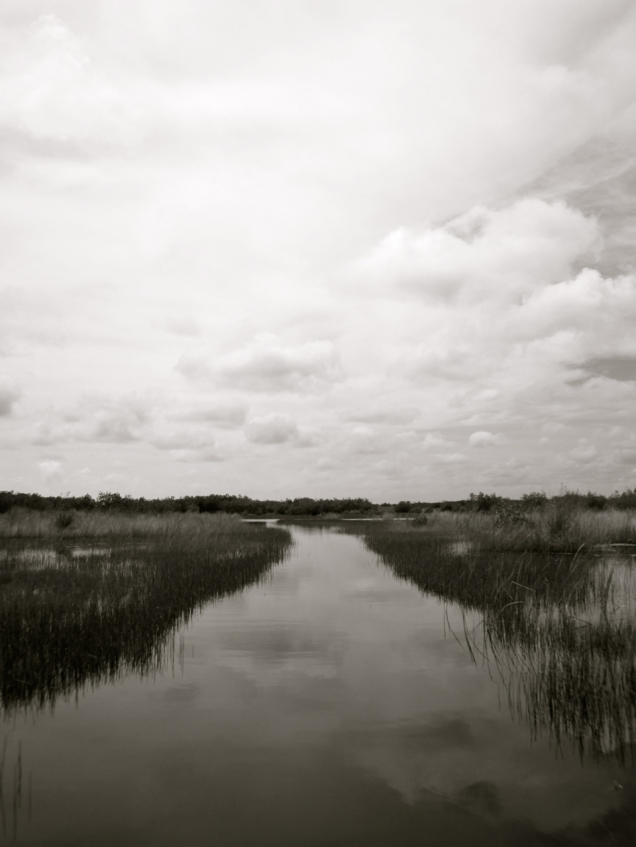 The Everglades Florida, Jennifer Allison